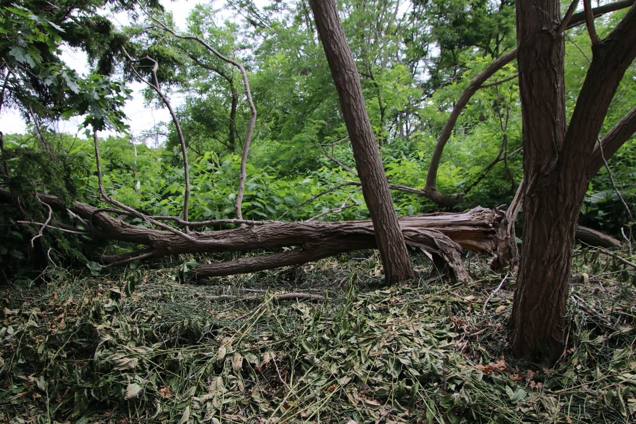 想定される風災の被害状況