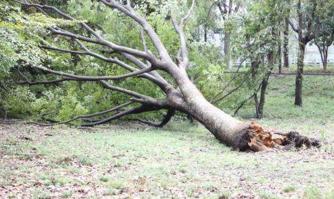 大損する前に知ってほしい!台風による災害は火災保険で補償される