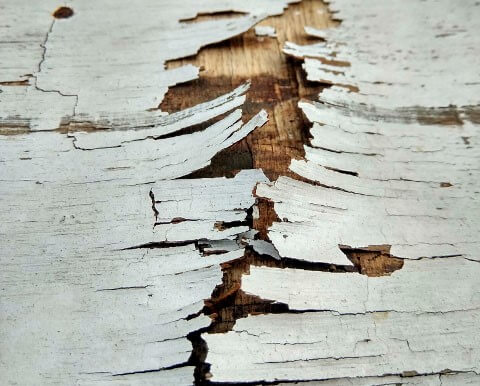 木製フェンス腐りの原因