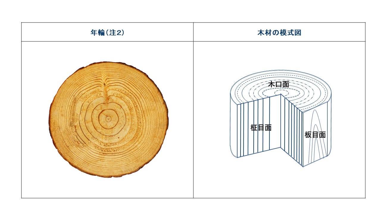 注2.年輪と木材の模式図